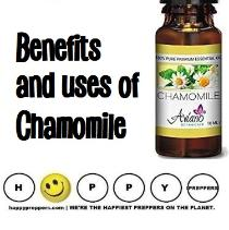 Benefits and uses of chamomile