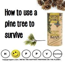 How to use a pine tree to survive