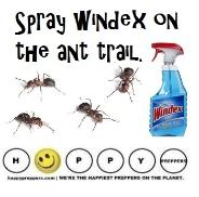Windex is a deterrent for ants - kills, cleans and deters ants