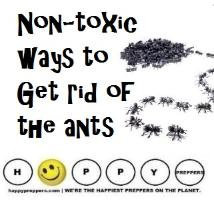 Non-toxic ways to get rid of ants