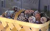 Pine cones in prepping