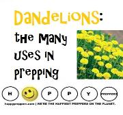 Dandelion uses for preppers