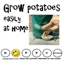 Grow Potatoes easily at home