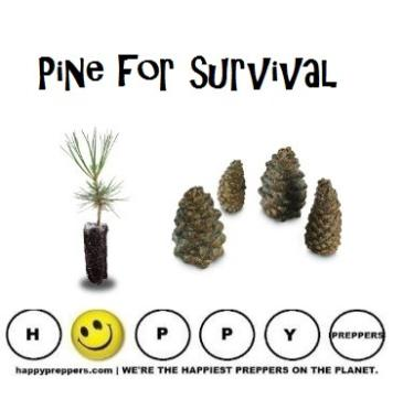 Pine uses for survival (cones, pollen, needles, bark, sap and tar)