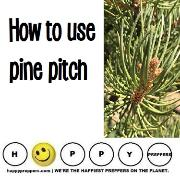 How to use pine pitch for survival