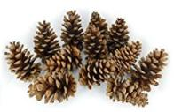 Pinecones for potpourri