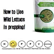 How to Use Wild Lettuce prepping